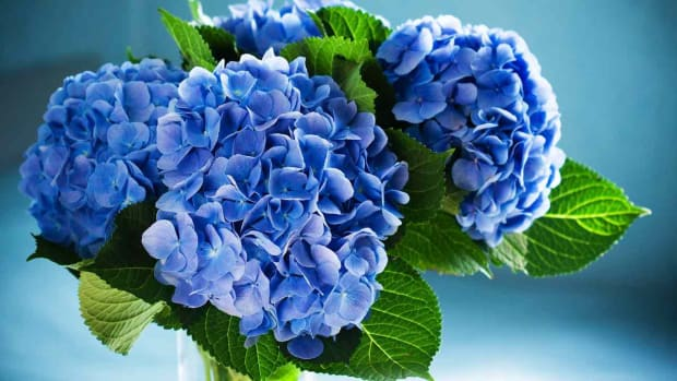 ZC. How to Use Hydrangeas in a Wedding Centerpiece Promo Image