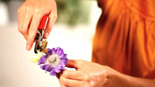 G. How to Pick & Prepare Flowers for a Boutonniere Promo Image