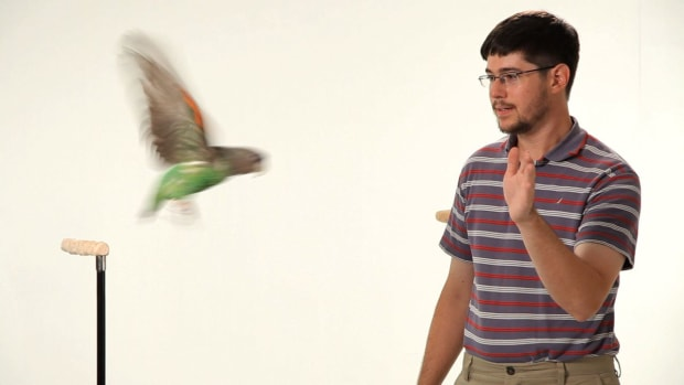 ZF. How to Teach Your Parrot to Fly Promo Image