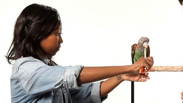 O. How to Train Your Parrot to Step Up Promo Image