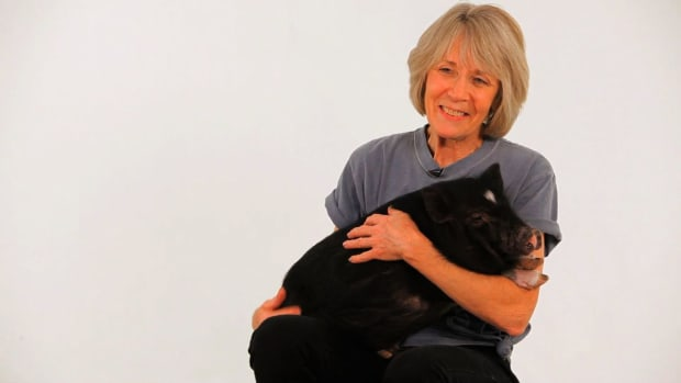 ZA. About Pig Expert Susan Magidson Promo Image