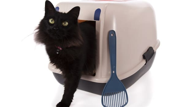 Q. How to Litter Box Train Your Cat Promo Image