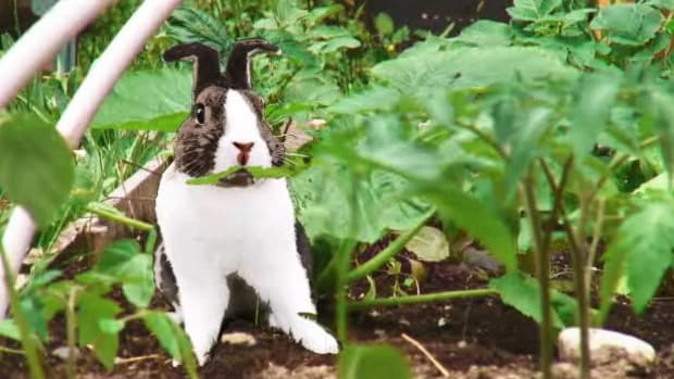 A. How to Install a Rabbit-Proof Fence Promo Image