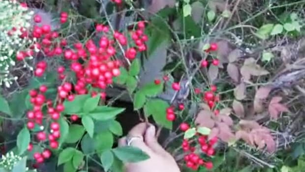 W. How to Prune Plants Promo Image