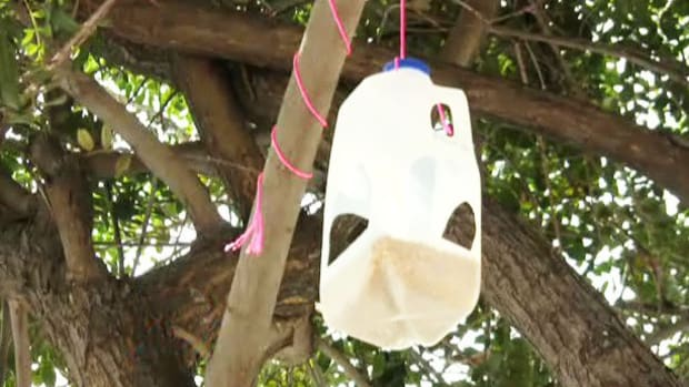 ZG. How to Make a Milk Carton Bird Feeder Promo Image
