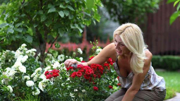 ZI. 3 Ways to Make Your Yard Eco-Friendly Promo Image