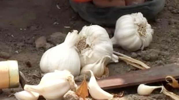 W. How to Grow Garlic Promo Image