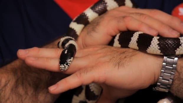 B. Best Pet Snake for Beginners Promo Image