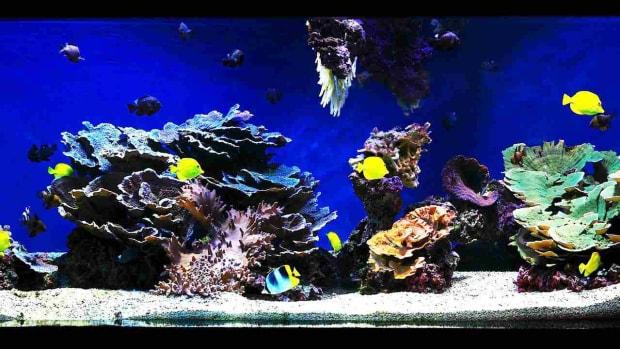 F. How to Aquascape a Saltwater Aquarium Promo Image