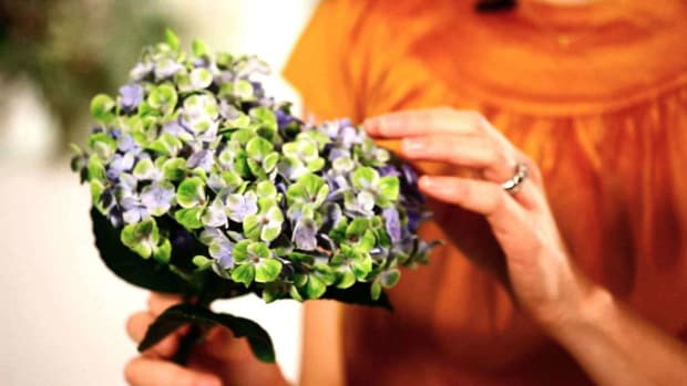 C. How to Make Hydrangeas Last Longer in a Floral Arrangement Promo Image