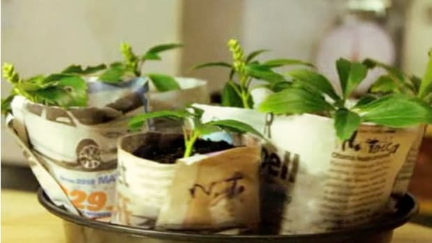 G. How to Create Seed-Starting Pots from Newspapers Promo Image