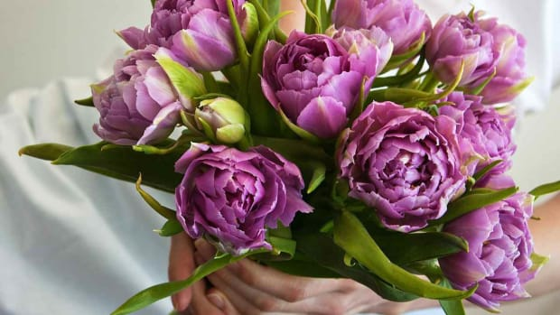 ZQ. 5 Tips about Purple Flowers for a Wedding Promo Image