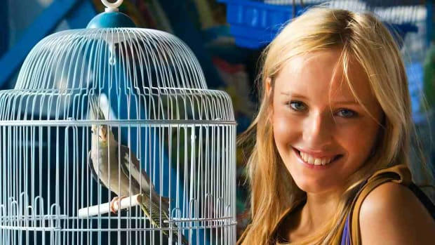 H. What Are the Best Pet Birds for Apartment Dwellers? Promo Image