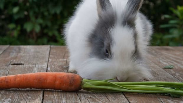 E. Which Rabbit Breeds Make the Best Pets? Promo Image