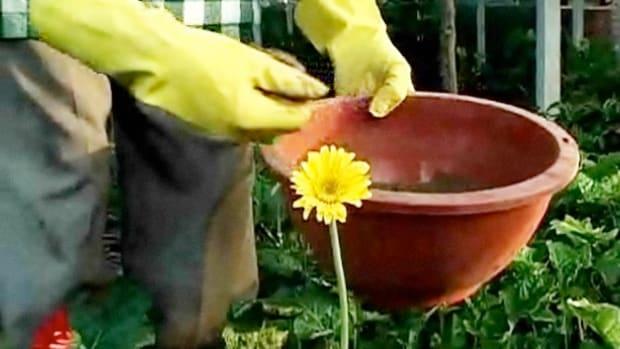 L. How to Make Fertilizer Promo Image