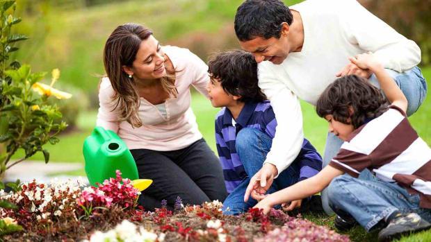 ZH. Environmental Benefits of Planting a Tree Promo Image