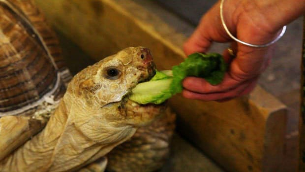 P. How to Feed a Land Turtle Promo Image
