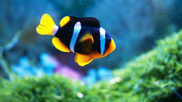 ZW. How to Maintain Your Fish Tank when You're Out of Town Promo Image