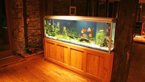 ZX. How to Maintain a Big Fish Tank Promo Image