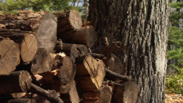 Q. Quick Tips: How to Store Firewood Promo Image