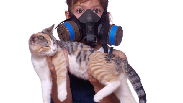S. How to Reduce Cat Odor & Cat Poop Odor Promo Image
