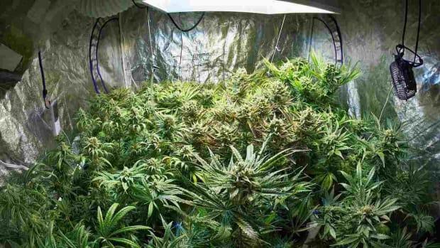 ZA. The Case against Medical Marijuana Promo Image