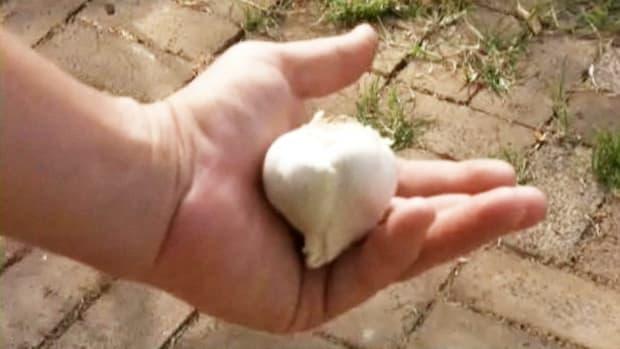 D. How to Grow Garlic Indoors Promo Image