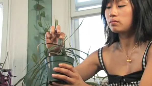 U. How to Grow Plants From Cuttings Promo Image