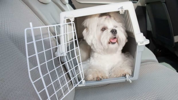 ZE. How to Travel with Your Puppy Promo Image