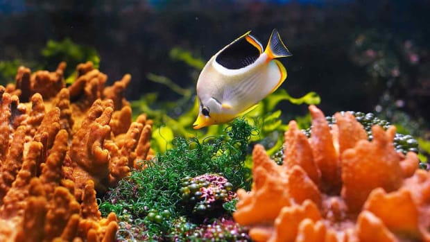 ZI. How to Clean a Saltwater Fish Tank Promo Image