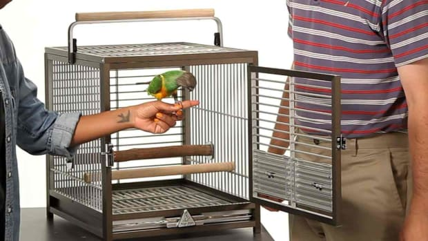 G. How to Take a Parrot In & Out of Its Cage Promo Image