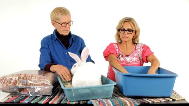 ZJ. Best Litter Material for a Pet Rabbit Promo Image