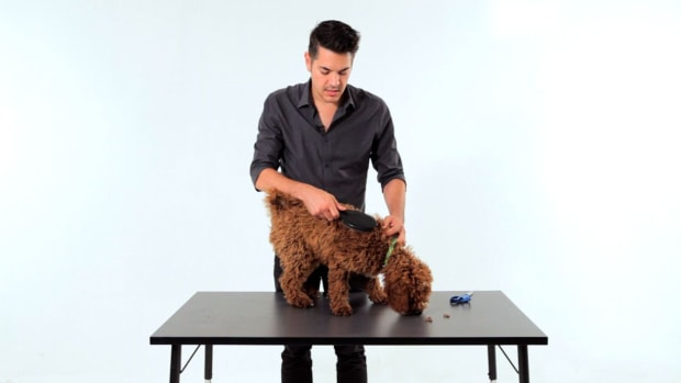 W. How to Brush & Groom Your Puppy Promo Image