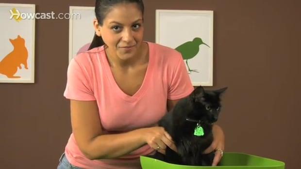 F. كيفية تدريب القط على قضاء حاجته .في صندوق الفضلات Promo Image