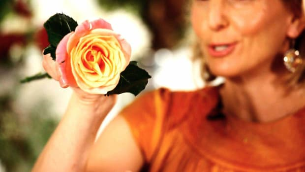 D. How to Make Roses Open Faster in a Floral Arrangement Promo Image
