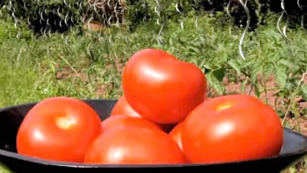 I. How to Prune Tomato Plants Promo Image