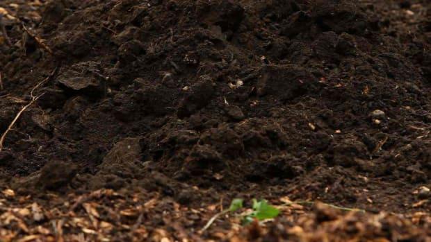 ZA. Soil Basics Promo Image