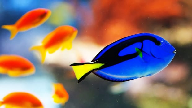 ZZE. How Much Electricity Does a Large Fish Tank Use? Promo Image