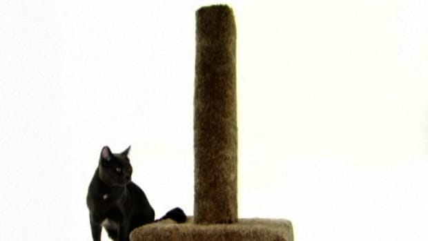 U. How to Make a Cat Scratching Post Promo Image