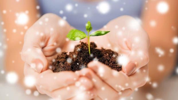 ZE. 4 Ways to Make Christmas Eco-Friendly Promo Image