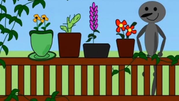 F. How to Buy Container Gardening Pots Promo Image