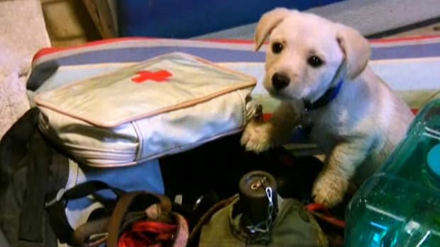 I. How to Take Dogs Camping Promo Image