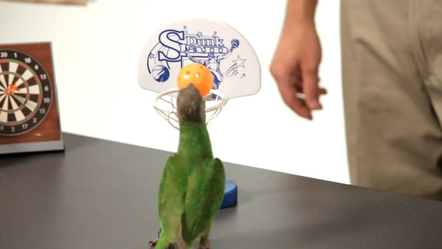 ZA. How to Teach Your Parrot to Dunk a Basketball Promo Image