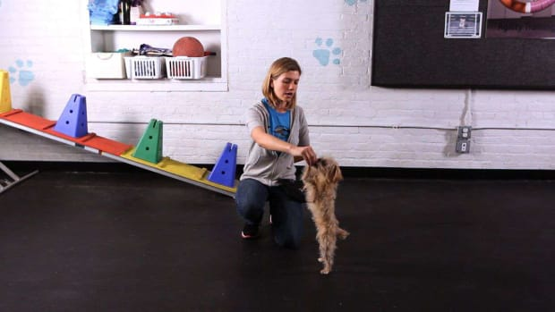 ZF. How to Teach Your Dog to Dance Promo Image