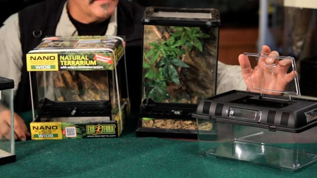 W. How to Pick Out & Set Up a Terrarium for Your Pet Tarantula Promo Image