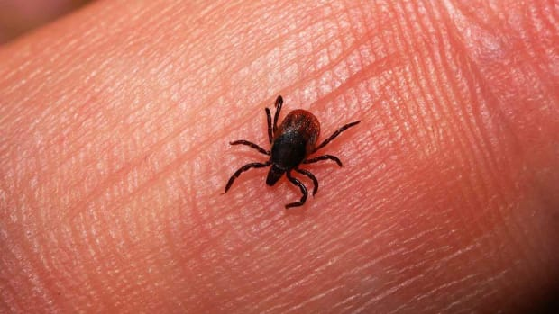 ZI. How to Protect Yourself from Ticks Promo Image