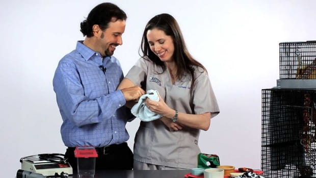 ZJ. How to Care for Pet Sugar Gliders with Dr. Anthony Pilny Promo Image