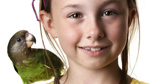 F. What Is the Best Pet Bird for a Child? Promo Image