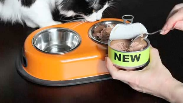 E. How to Convince a Cat to Eat New Food Promo Image