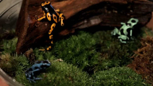 L. 5 Cool Facts about Poison Dart Frogs Promo Image